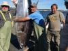 _Bob's first Tuna