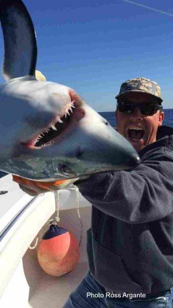 Contender shark